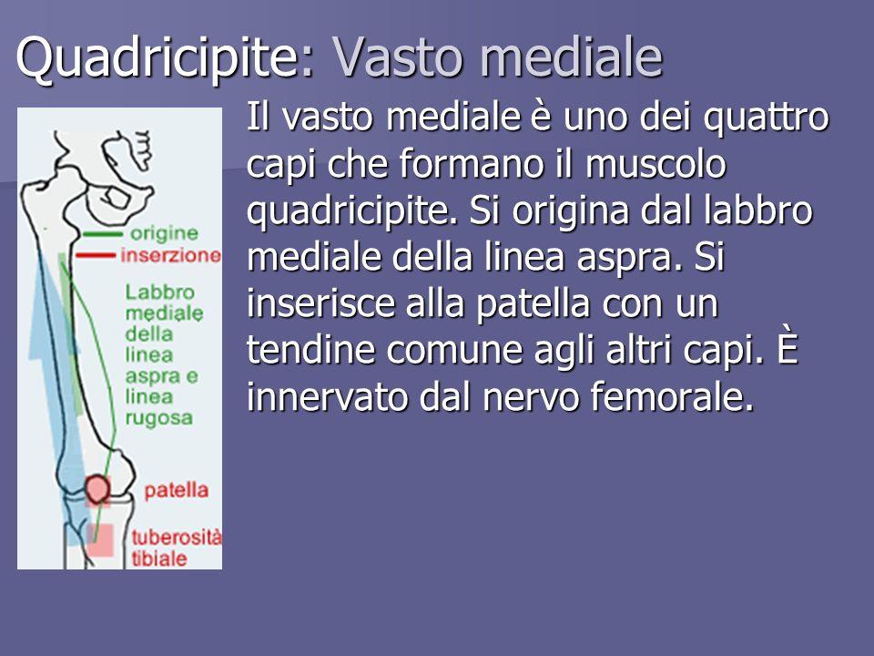 Quadricipite: Vasto mediale Il vasto mediale è uno dei quattro capi che formano il muscolo quadricipite. Si origina dal labbro mediale della linea asp