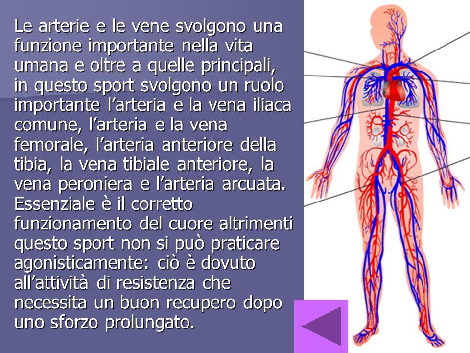 Le arterie e le vene svolgono una funzione importante nella vita umana e oltre a quelle principali, in questo sport svolgono un ruolo importante larte