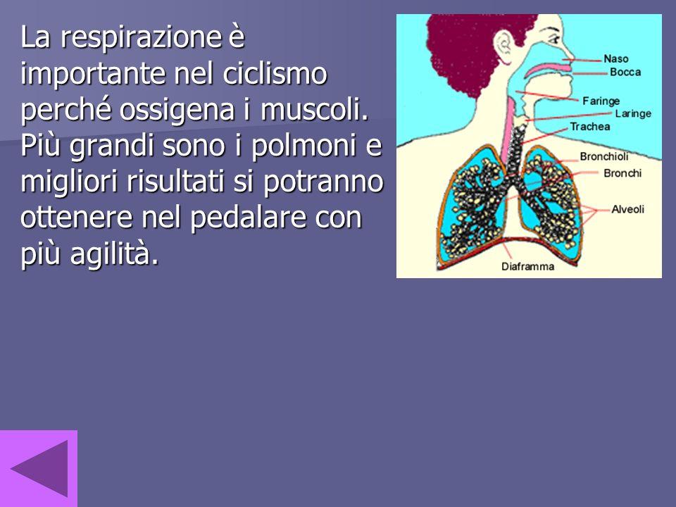 La respirazione è importante nel ciclismo perché ossigena i muscoli. Più grandi sono i polmoni e migliori risultati si potranno ottenere nel pedalare