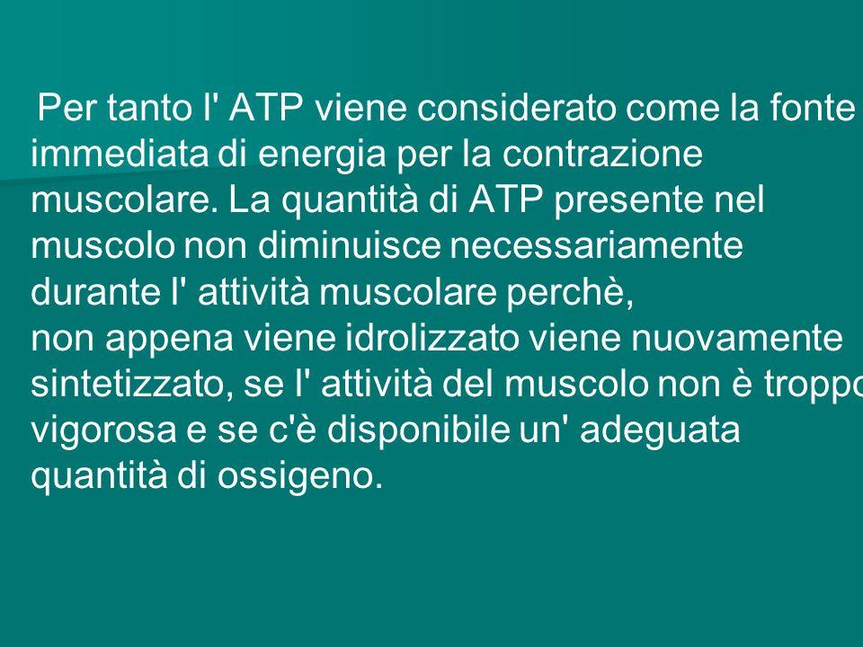 Per tanto l' ATP viene considerato come la fonte immediata di energia per la contrazione muscolare. La quantità di ATP presente nel muscolo non diminu