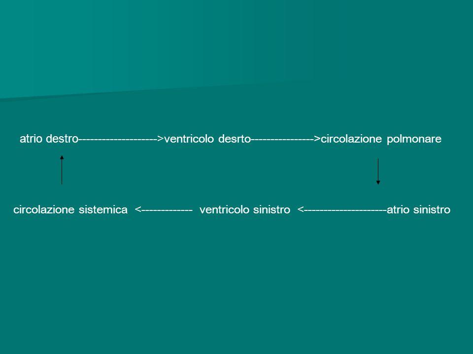 atrio destro--------------------> ventricolo desrto---------------->circolazione polmonare circolazione sistemica <------------- ventricolo sinistro <