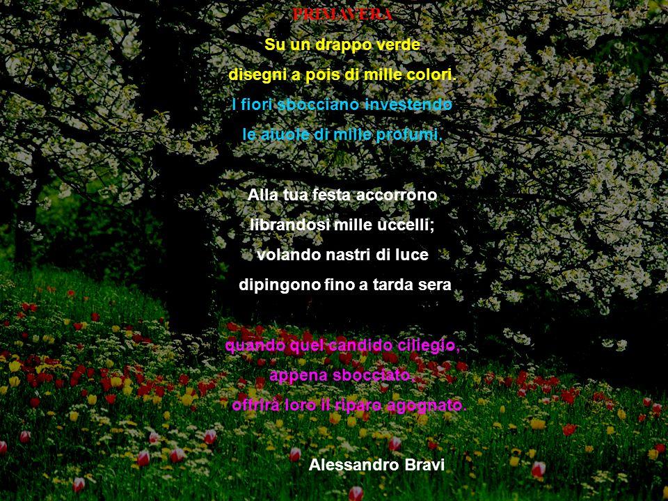 PRIMAVERA Su un drappo verde disegni a pois di mille colori. I fiori sbocciano investendo le aiuole di mille profumi. Alla tua festa accorrono librand