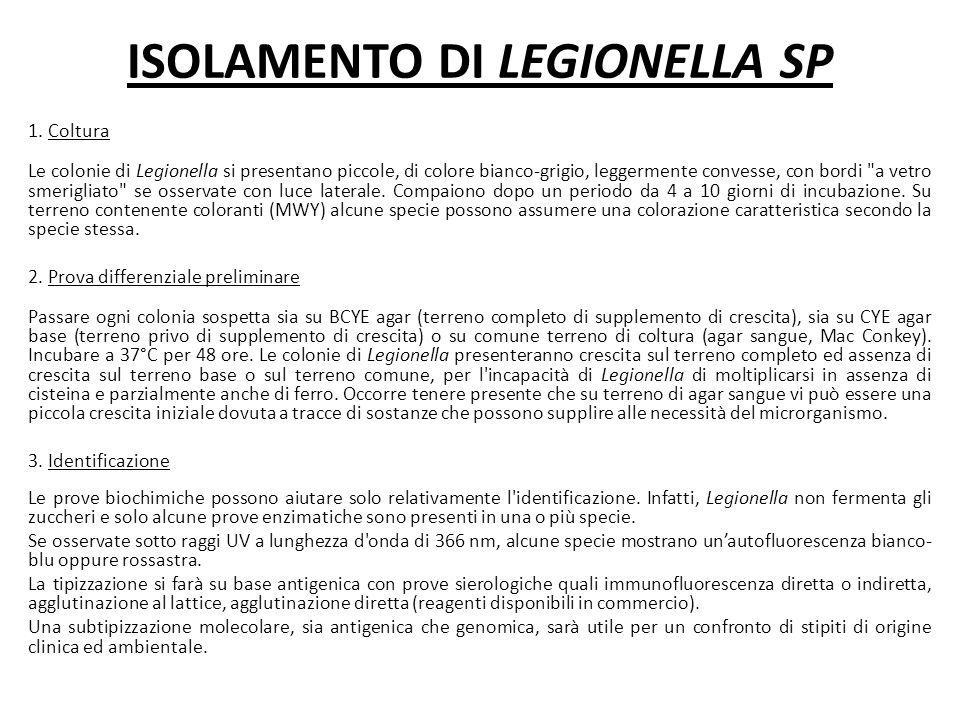 ISOLAMENTO DI LEGIONELLA SP 1. Coltura Le colonie di Legionella si presentano piccole, di colore bianco-grigio, leggermente convesse, con bordi