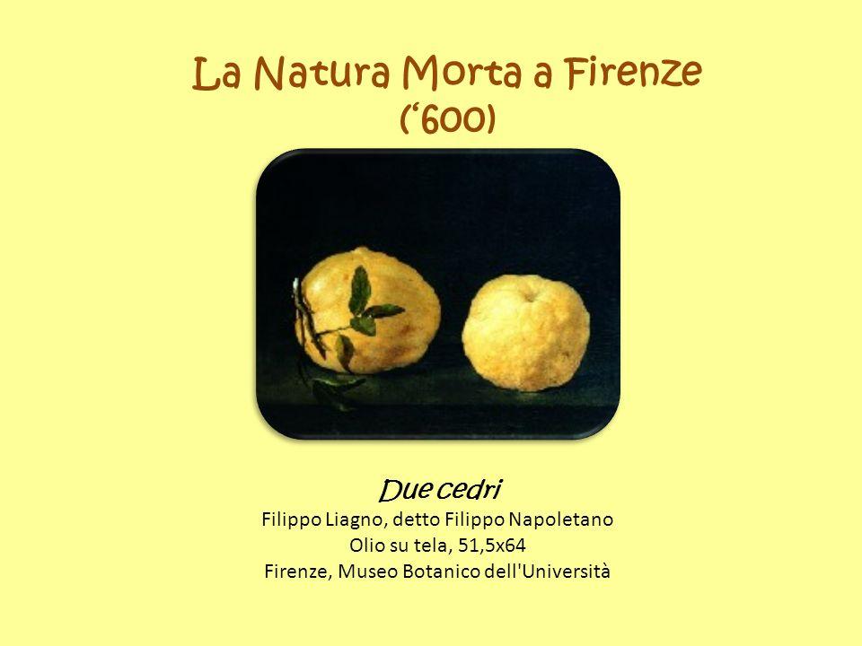 La Natura Morta a Firenze (600) Due cedri Filippo Liagno, detto Filippo Napoletano Olio su tela, 51,5x64 Firenze, Museo Botanico dell Università