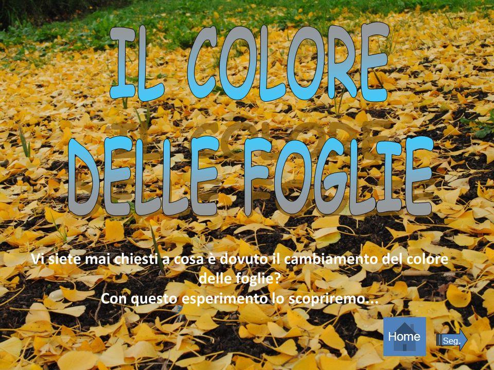 Vi siete mai chiesti a cosa è dovuto il cambiamento del colore delle foglie? Con questo esperimento lo scopriremo... Home Seg.