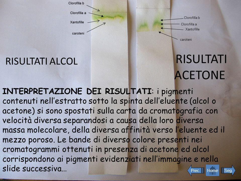 RISULTATI ACETONE RISULTATI ALCOL INTERPRETAZIONE DEI RISULTATI: i pigmenti contenuti nellestratto sotto la spinta delleluente (alcol o acetone) si so