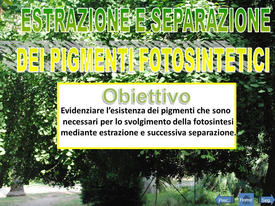 Evidenziare lesistenza dei pigmenti che sono necessari per lo svolgimento della fotosintesi mediante estrazione e successiva separazione. Seg. Home Pr