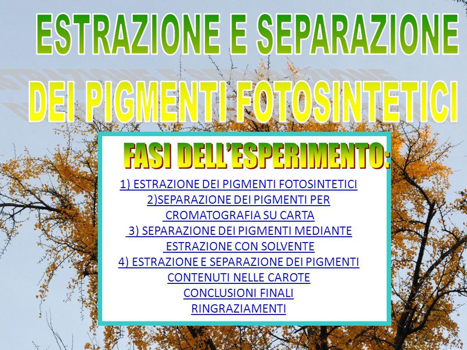 1) ESTRAZIONE DEI PIGMENTI FOTOSINTETICI 2)SEPARAZIONE DEI PIGMENTI PER CROMATOGRAFIA SU CARTA 1) ESTRAZIONE DEI PIGMENTI FOTOSINTETICI 2)SEPARAZIONE