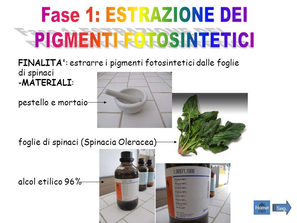 FINALITA': estrarre i pigmenti fotosintetici dalle foglie di spinaci -MATERIALI: pestello e mortaio foglie di spinaci (Spinacia Oleracea) alcol etilic