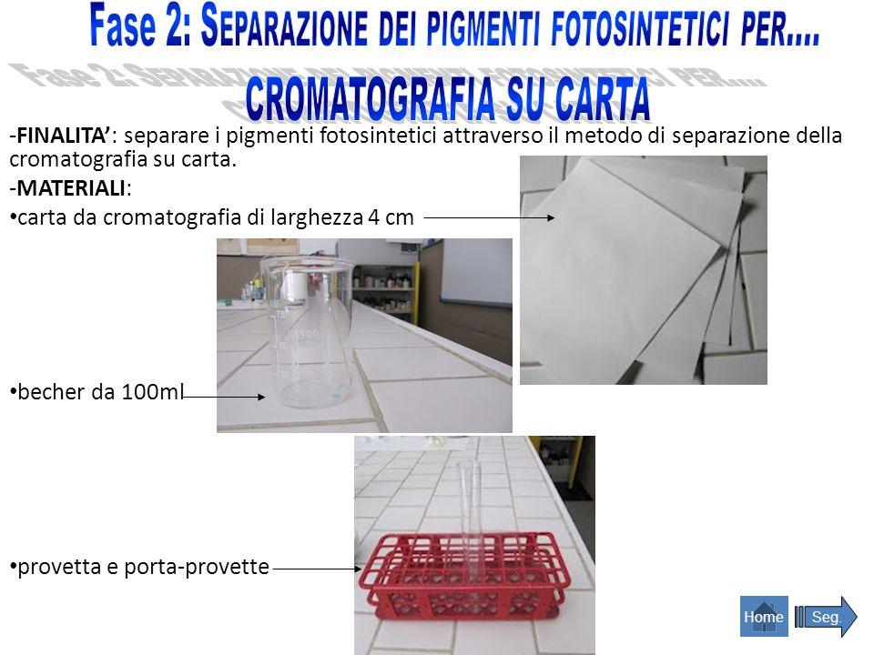 soluzione pigmenti fotosintetici-alcol pipetta Pasteur alcol (C 2 H 5 OH) o acetone (C 3 H 6 O) Seg.