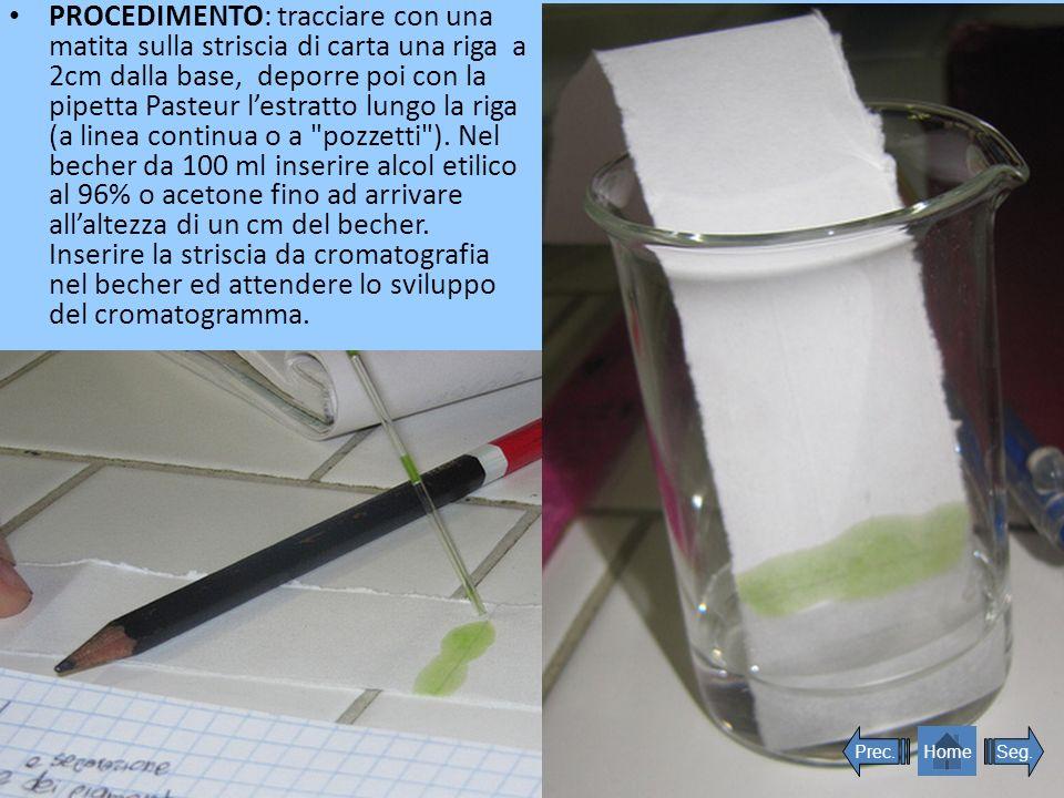 PROCEDIMENTO: tracciare con una matita sulla striscia di carta una riga a 2cm dalla base, deporre poi con la pipetta Pasteur lestratto lungo la riga (