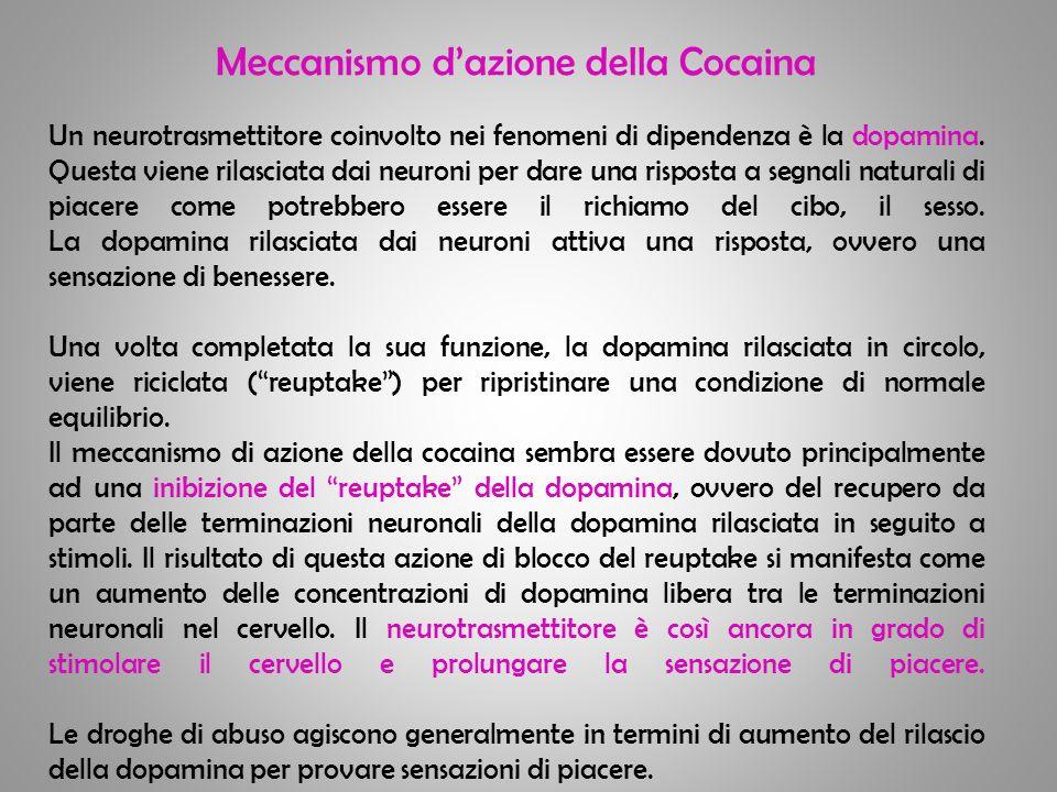 Meccanismo dazione della Cocaina Un neurotrasmettitore coinvolto nei fenomeni di dipendenza è la dopamina. Questa viene rilasciata dai neuroni per dar