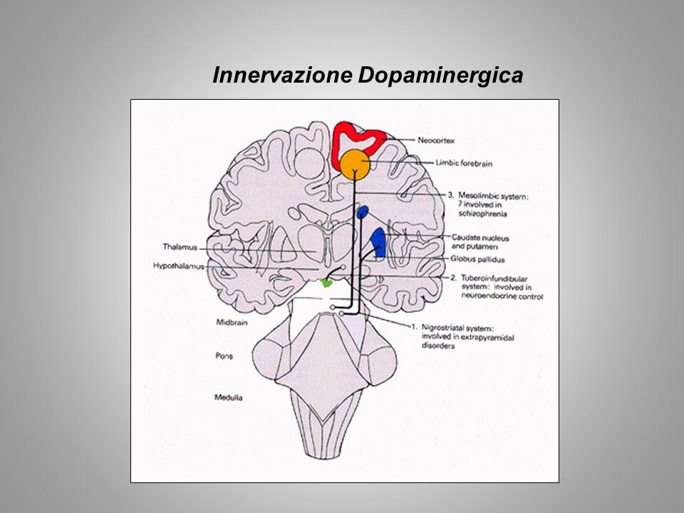 Meccanismi di azione degli oppiacei Nella VTA gli oppiacei agiscono riducendo lattività dei neuroni GABAergici, che inibiscono i neuroni dopaminergici; tale azione aumenta il rilascio di DA.