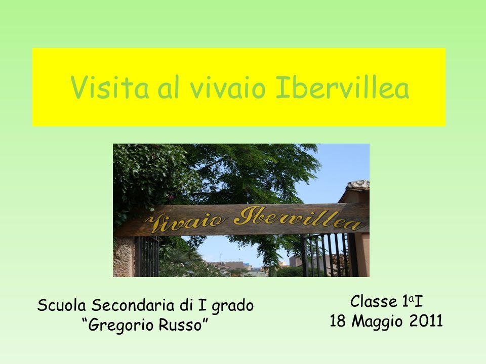 Visita al vivaio Ibervillea Classe 1 a I 18 Maggio 2011 Scuola Secondaria di I grado Gregorio Russo