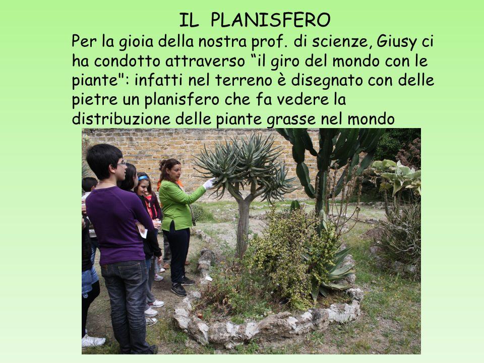 IL PLANISFERO Per la gioia della nostra prof. di scienze, Giusy ci ha condotto attraverso il giro del mondo con le piante