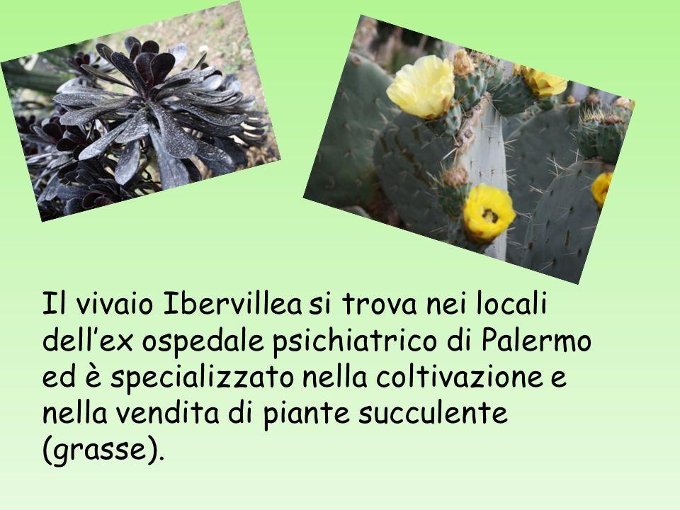 Il vivaio Ibervillea si trova nei locali dellex ospedale psichiatrico di Palermo ed è specializzato nella coltivazione e nella vendita di piante succulente (grasse).