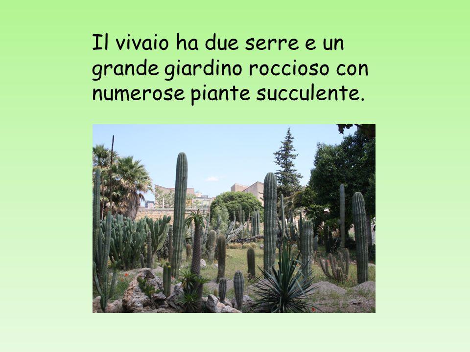 Il vivaio ha due serre e un grande giardino roccioso con numerose piante succulente.