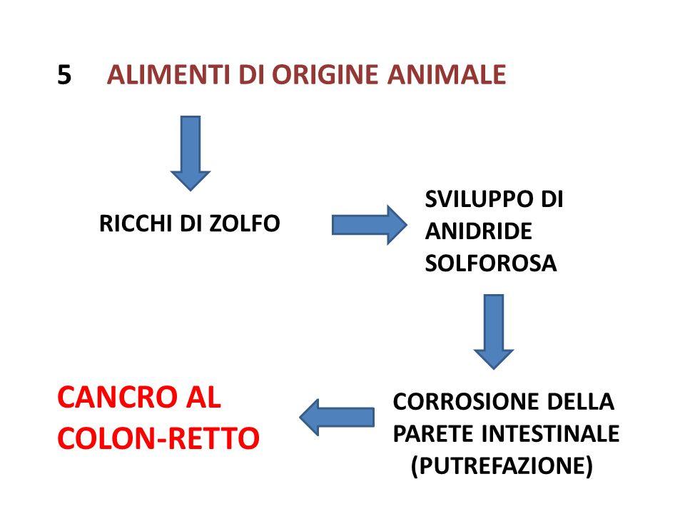 5 ALIMENTI DI ORIGINE ANIMALE RICCHI DI ZOLFO SVILUPPO DI ANIDRIDE SOLFOROSA CORROSIONE DELLA PARETE INTESTINALE (PUTREFAZIONE) CANCRO AL COLON-RETTO
