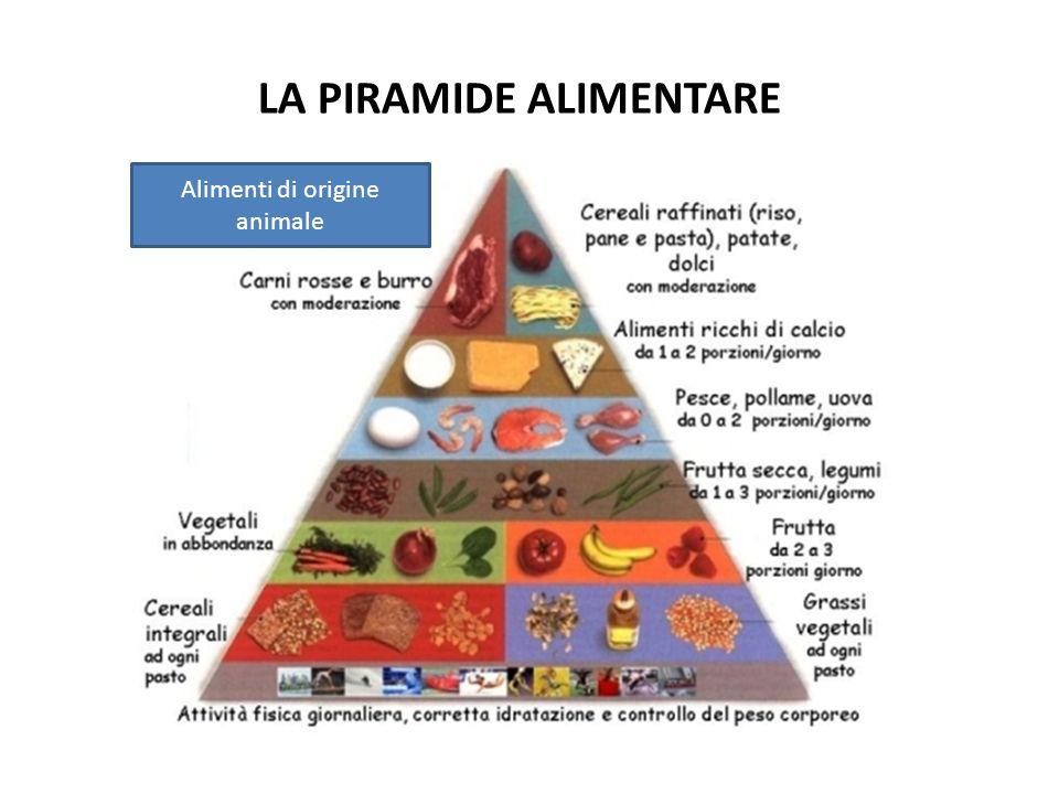 LA PIRAMIDE ALIMENTARE Alimenti di origine animale