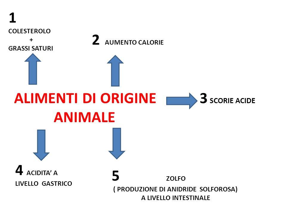 ALIMENTI DI ORIGINE 3 SCORIE ACIDE ANIMALE 1 COLESTEROLO + GRASSI SATURI 2 AUMENTO CALORIE 4 ACIDITA A LIVELLO GASTRICO 5 ZOLFO ( PRODUZIONE DI ANIDRI