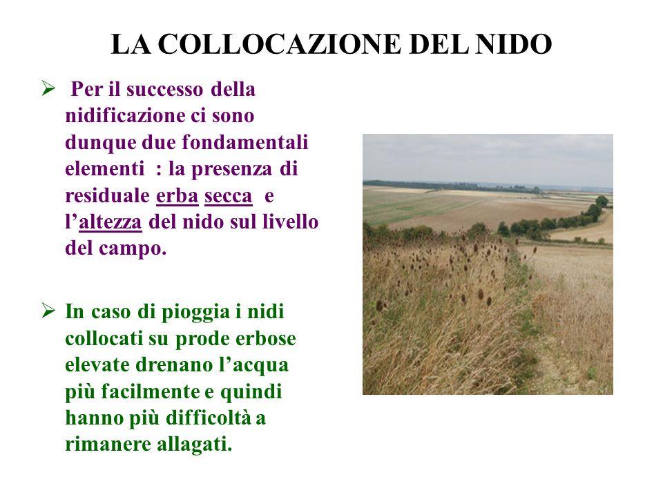 LA COLLOCAZIONE DEL NIDO Per il successo della nidificazione ci sono dunque due fondamentali elementi : la presenza di residuale erba secca e laltezza
