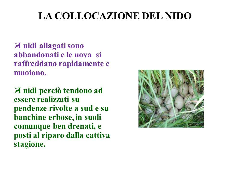 LA COLLOCAZIONE DEL NIDO I nidi allagati sono abbandonati e le uova si raffreddano rapidamente e muoiono. I nidi perciò tendono ad essere realizzati s