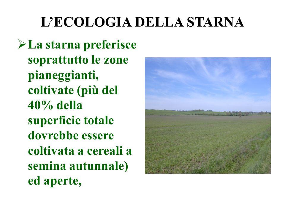 LECOLOGIA DELLA STARNA La starna preferisce soprattutto le zone pianeggianti, coltivate (più del 40% della superficie totale dovrebbe essere coltivata