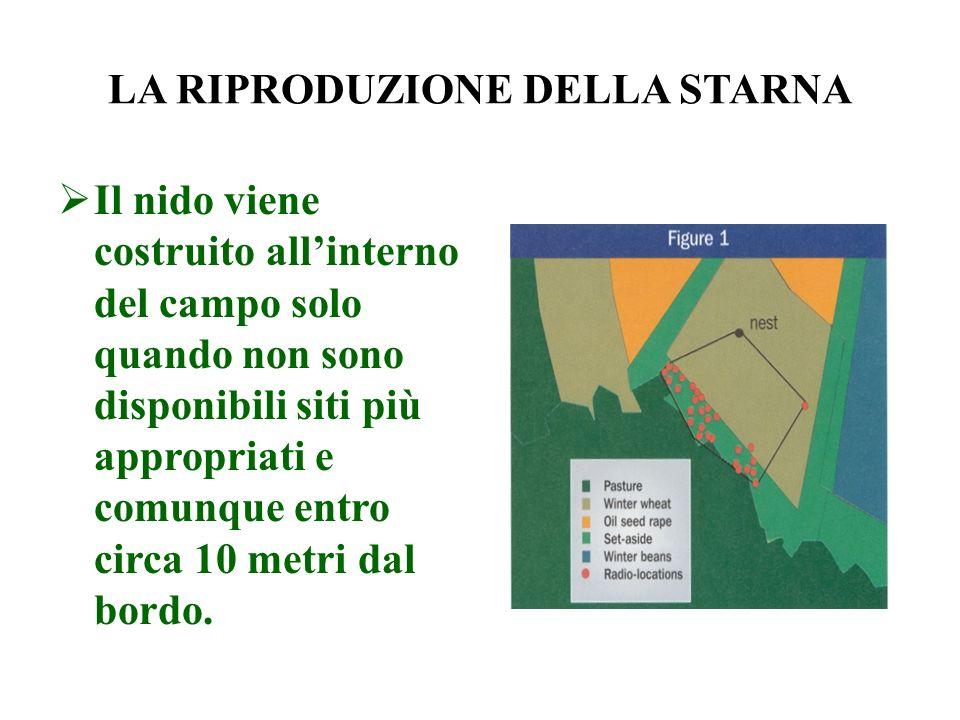 LA COLLOCAZIONE DEL NIDO Le ricerche condotte con limpiego della radiotelemetria hanno dimostrato che i siti posti su banchine e circondati da erba secca sono preferiti per la nidificazione.