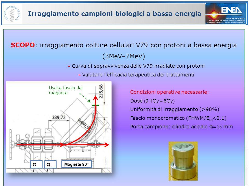 33 Irraggiamento campioni biologici a bassa energia SCOPO: irraggiamento colture cellulari V79 con protoni a bassa energia (3MeV–7MeV) - Curva di sopr