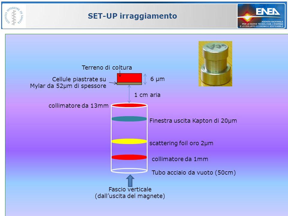 66 SET-UP irraggiamento 6 µm collimatore da 1mm scattering foil oro 2µm Finestra uscita Kapton di 20µm Fascio verticale (dalluscita del magnete) Cellu