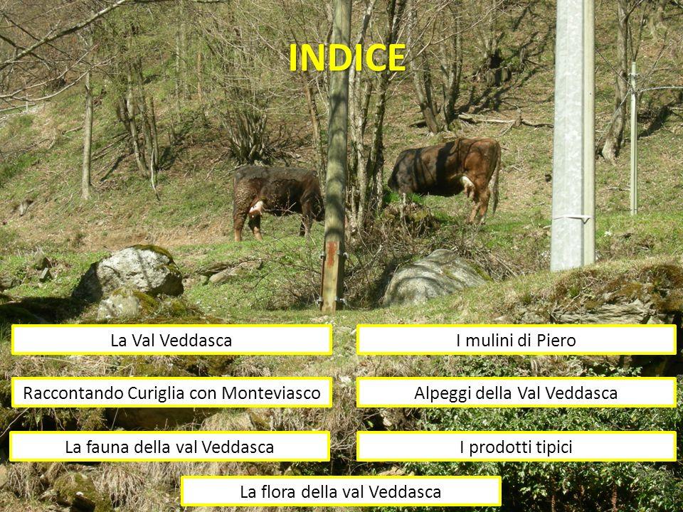 INDICE La Val Veddasca Raccontando Curiglia con Monteviasco I mulini di Piero Alpeggi della Val Veddasca La fauna della val VeddascaI prodotti tipici