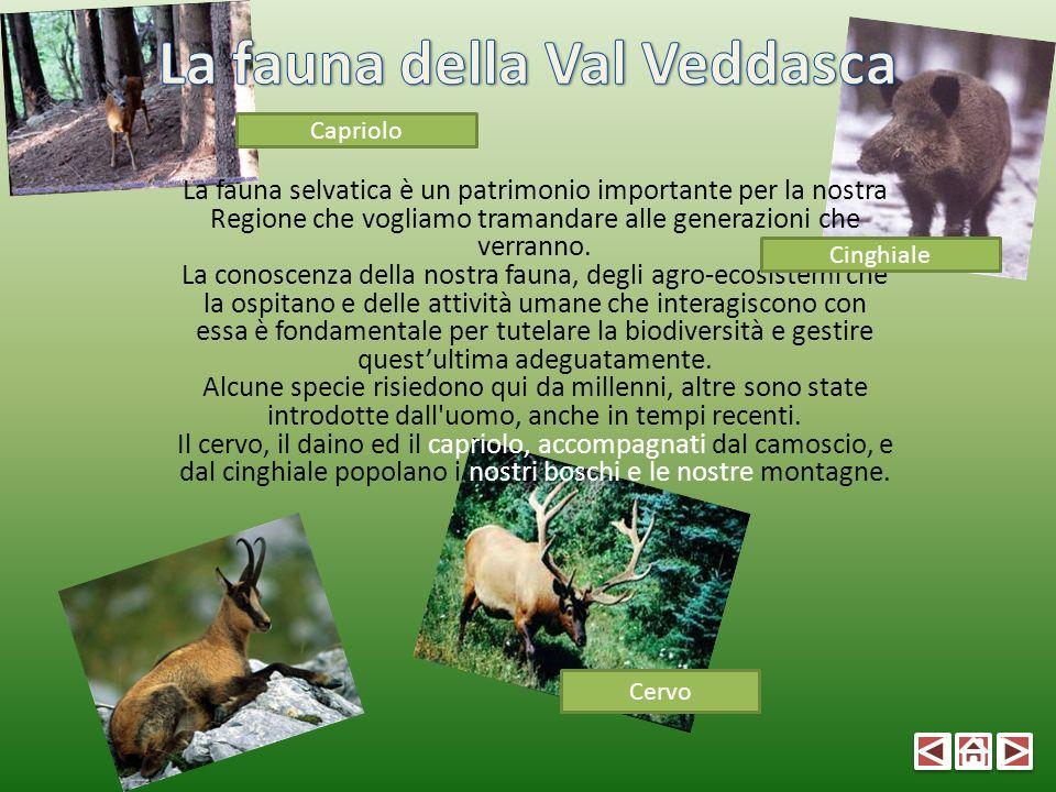 La fauna selvatica è un patrimonio importante per la nostra Regione che vogliamo tramandare alle generazioni che verranno. La conoscenza della nostra