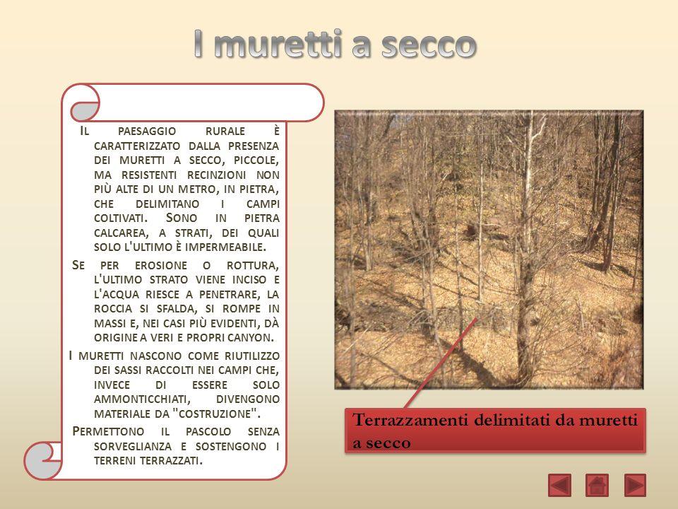 http://www.wikipedia.it http://www.caigermignaga.it http://www.italianflora.it http://www.monteviasco.it http://www.prolocoagra.it http://www.bensaver.it Sentieri e mulattiere… di Miozzi Maurizio Immagini: Produzione Propria Software utilizzato: Microsoft PowerPoint 2007-2010 Da utilizzare per la visualizzazione: Microsoft PowerPoint 2010 Acqua passata non macina più di Miozzi Maurizio Monteviasco.