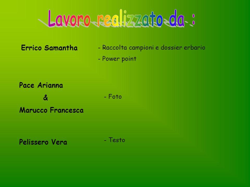 Errico Samantha - Raccolta campioni e dossier erbario - Power point Pace Arianna & Marucco Francesca - Foto Pelissero Vera - Testo