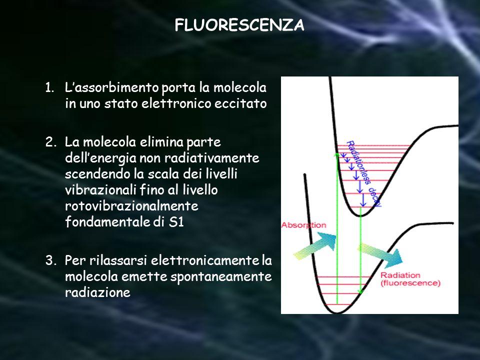 1.Lassorbimento porta la molecola in uno stato elettronico eccitato 2.La molecola elimina parte dellenergia non radiativamente scendendo la scala dei