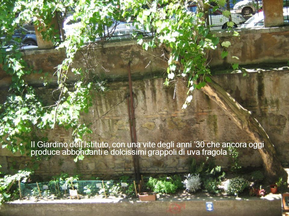 Il Giardino dellIstituto, con una vite degli anni 30 che ancora oggi produce abbondanti e dolcissimi grappoli di uva fragola …