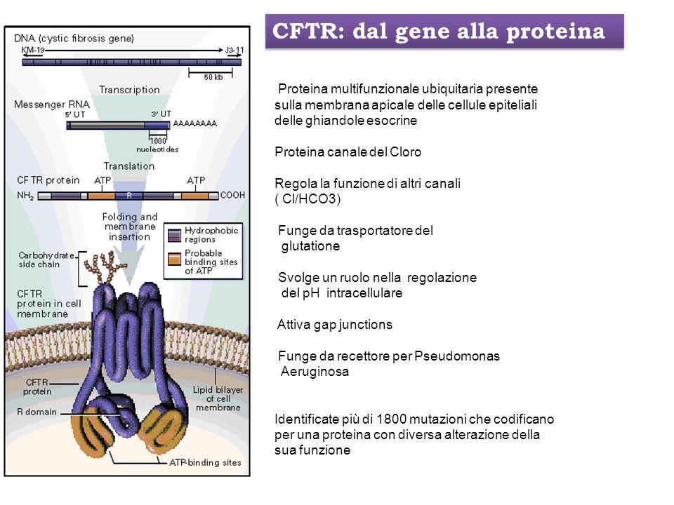 Proteina multifunzionale ubiquitaria presente sulla membrana apicale delle cellule epiteliali delle ghiandole esocrine Proteina canale del Cloro Regol
