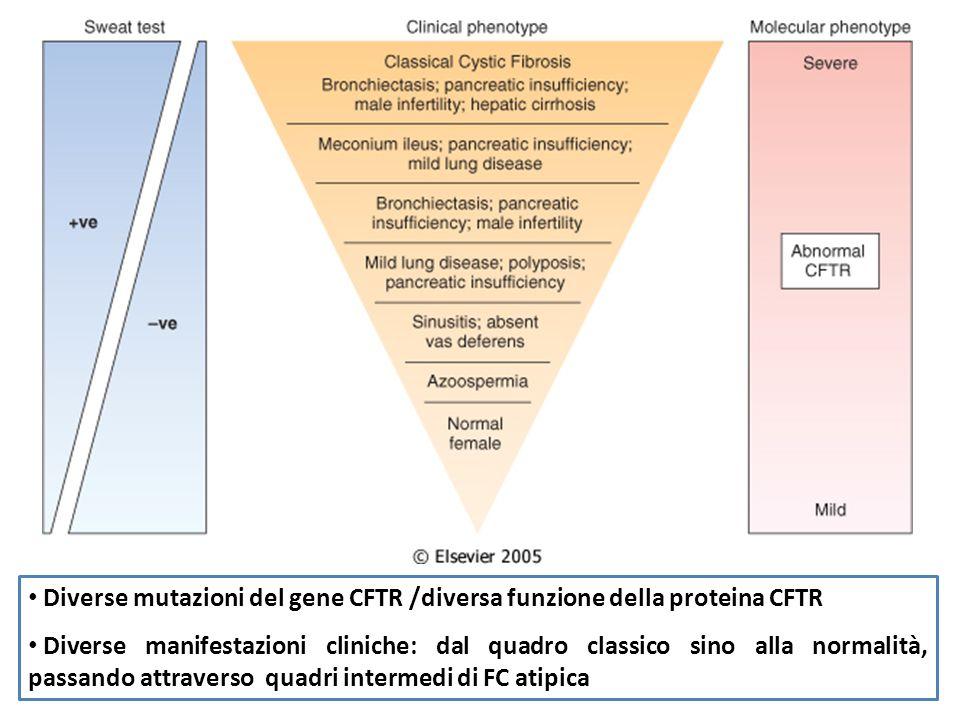 Diverse mutazioni del gene CFTR /diversa funzione della proteina CFTR Diverse manifestazioni cliniche: dal quadro classico sino alla normalità, passan