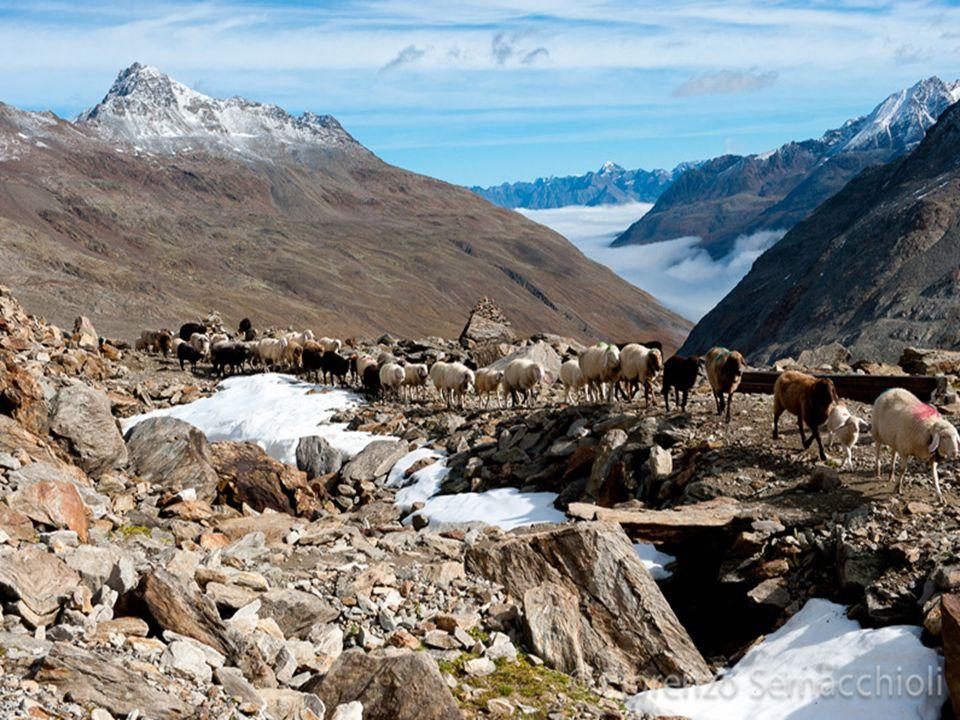 Michela Zucca Servizi culturali La popolazione delle Alpi è nomade: Da sempre si seguono le mandrie per assicurare loro erba fresca da mangiare.