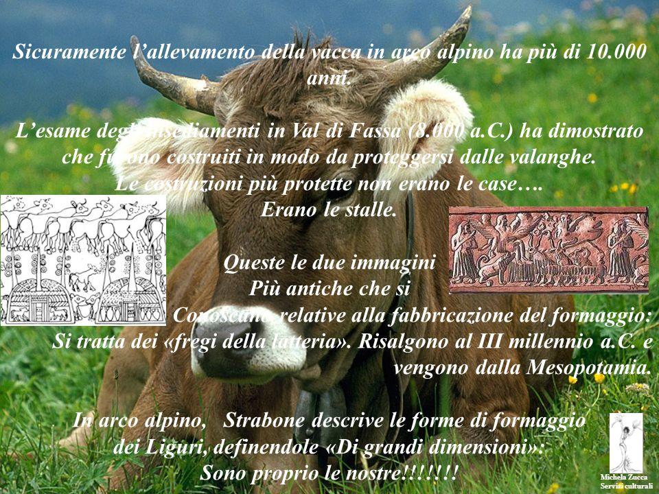 Michela Zucca Servizi culturali Sicuramente lallevamento della vacca in arco alpino ha più di 10.000 anni. Lesame degli insediamenti in Val di Fassa (