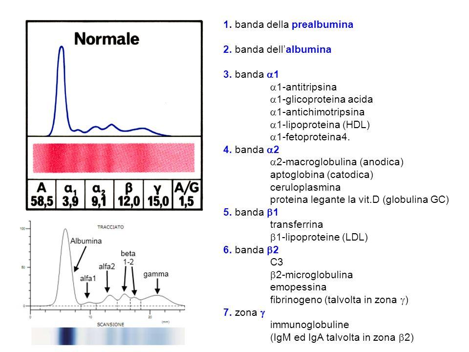 1. banda della prealbumina 2. banda dellalbumina 3. banda 1 1-antitripsina 1-glicoproteina acida 1-antichimotripsina 1-lipoproteina (HDL) 1-fetoprotei