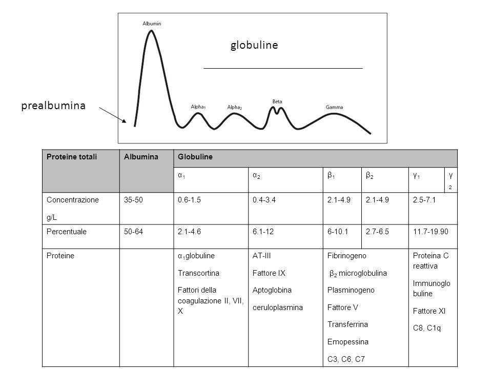 globuline prealbumina Proteine totaliAlbuminaGlobuline α1α1 α2α2 β1β1 β2β2 γ1γ1 γ2γ2 Concentrazione g/L 35-500.6-1.50.4-3.42.1-4.9 2.5-7.1 Percentuale