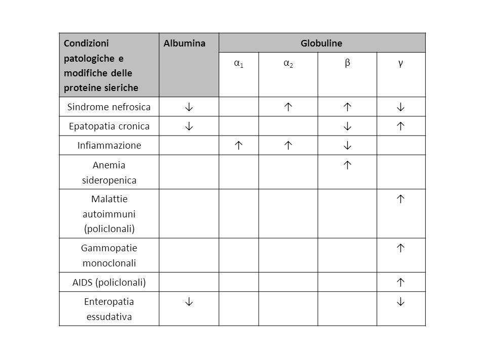 Condizioni patologiche e modifiche delle proteine sieriche AlbuminaGlobuline α1α1 α2α2 βγ Sindrome nefrosica Epatopatia cronica Infiammazione Anemia s