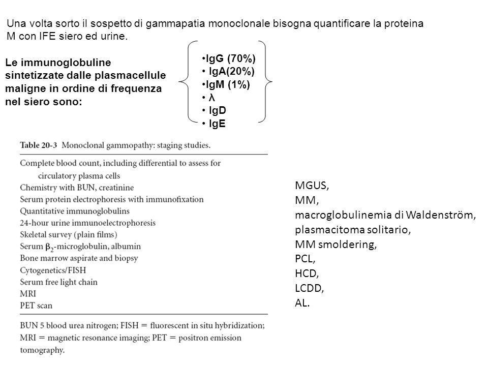 Le immunoglobuline sintetizzate dalle plasmacellule maligne in ordine di frequenza nel siero sono: IgG (70%) IgA(20%) IgM (1%) λ IgD IgE Una volta sor