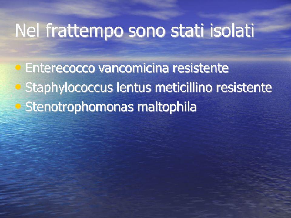 Nel frattempo sono stati isolati Enterecocco vancomicina resistente Enterecocco vancomicina resistente Staphylococcus lentus meticillino resistente St