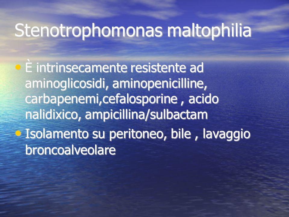 Stenotrophomonas maltophilia È intrinsecamente resistente ad aminoglicosidi, aminopenicilline, carbapenemi,cefalosporine, acido nalidixico, ampicillina/sulbactam È intrinsecamente resistente ad aminoglicosidi, aminopenicilline, carbapenemi,cefalosporine, acido nalidixico, ampicillina/sulbactam Isolamento su peritoneo, bile, lavaggio broncoalveolare Isolamento su peritoneo, bile, lavaggio broncoalveolare