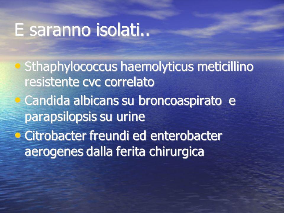 E saranno isolati.. Sthaphylococcus haemolyticus meticillino resistente cvc correlato Sthaphylococcus haemolyticus meticillino resistente cvc correlat