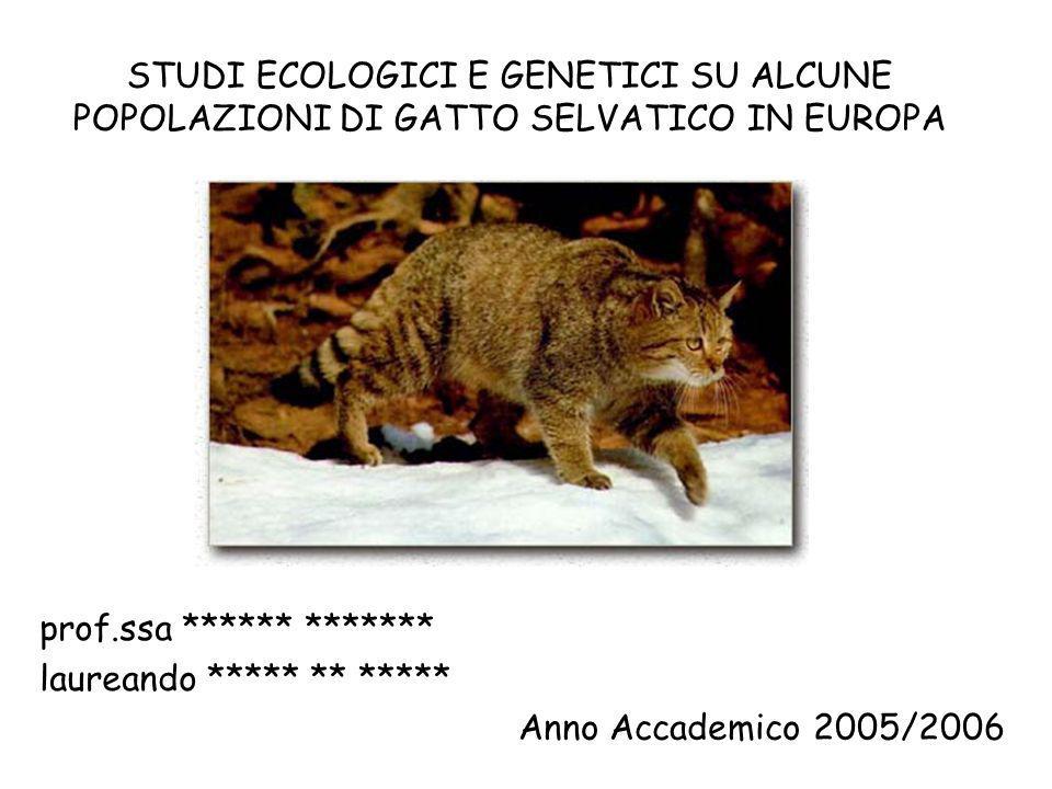 STUDI ECOLOGICI E GENETICI SU ALCUNE POPOLAZIONI DI GATTO SELVATICO IN EUROPA prof.ssa ****** ******* laureando ***** ** ***** Anno Accademico 2005/20