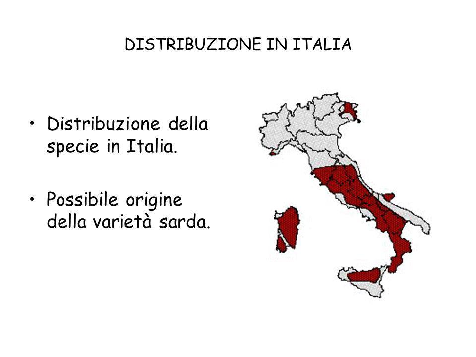 DISTRIBUZIONE IN ITALIA Distribuzione della specie in Italia. Possibile origine della varietà sarda.