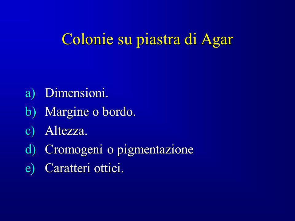 Colonie su piastra di Agar a)Dimensioni. b)Margine o bordo. c)Altezza. d)Cromogeni o pigmentazione e)Caratteri ottici.